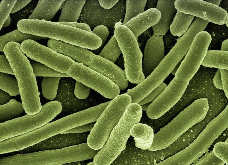 Probiotikum-3