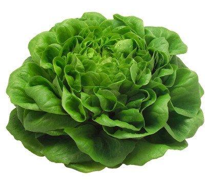 Kopfsalat frisch aus Deutschland, 1 Stück